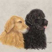 """Black & Gold""     Commission"
