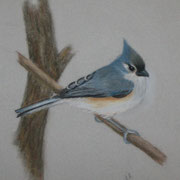 Tuifted Titmouse   -   Soft Pastel   -   Sold - Prints Available