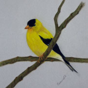 Goldfinch   -   Soft Pastel   -  Sold