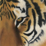 """""""On the Prowl""""     Soft Pastel"""