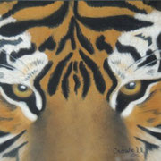 """Tiger Eyes""     Soft Pastel"