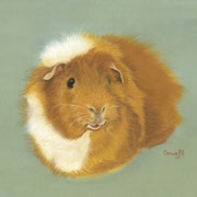 Guinea Pig     Available