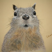 """Out of Nuts...Hurry Spring""    Sold - Prints Available"