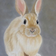 """Bunny""            Available"