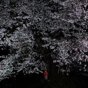 長折の人待ち地蔵桜:安達太良山を一望できる高台にある桜。