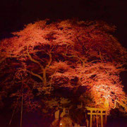 新殿神社の岩桜:道の駅の裏手にある4本の桜の木。