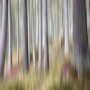 dieter härtter...................trees 1