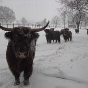 Wintermärchen auf dem Eschenhof
