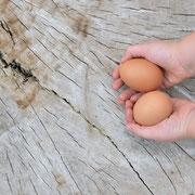 Eier vom Eschenhof Springe