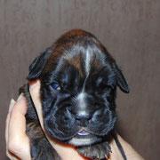 Paloma - im Alter von 2 Wochen