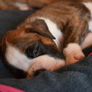 SanDiego ist auch müde!
