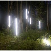 Wald, erleuchtet, Installation, 2005