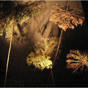 Schirme, Lange Nacht der Museen 2011