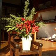 トンガラシ 月桂樹 ローズマリー 11月
