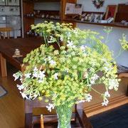 6月20日 フェンネルとソープワートの花