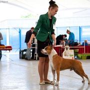 Фото Дарьи Ситдиковой   http://lovely-dogs.ru/?p=1764
