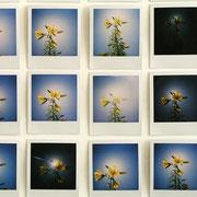 Polaroids & Instant Film