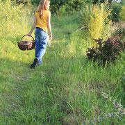 Gwendoline, qui nous suit depuis toujours à la cueillette ...@les_jardins_de_koantiz