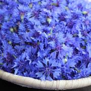 Bleuet@les_jardins_de_koantiz