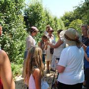 Stage de reconnaissance végétale et botanique@les_jardins_de_koantiz