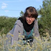 Valérie et ses hélichryses italiennes@les_jardins_de_koantiz