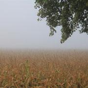 der herbstliche Nebel zieht über das Donaumoos...