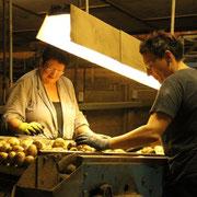 Handverlesung der Kartoffeln durch Ida & Melanie Klink
