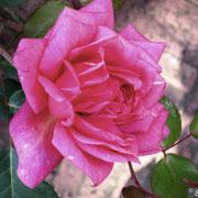Beauté Inconstante-Primavera