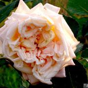 Lady Castlereagh-Ottobre