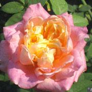Rosette Delizy-Agosto