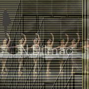 Musik und Tanz in Ihrer Verwobenheit