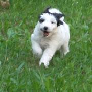 Flying Dog Jobo