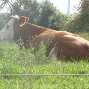 "Kühe kennen unsere ,,Landeier""!"