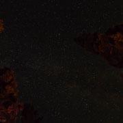 Sternenhimmel über den vom Lagerfeuer beleuchteten Bäumen.
