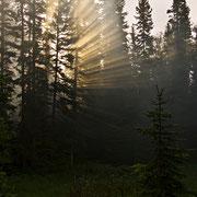 Die ersten Sonnenstrahlen des Tages...
