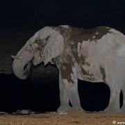 Elefanten belegen nachts mitunter stundenlang das Wasserloch - ein Schlammbad tut einfach richtig gut!