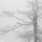 Der Lusen kann auch ganz anders: Nebel und Schneesturm!! Auch dieses Wetter hat seinen Reiz!