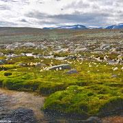 Typische Landschaft im Dovrefjell