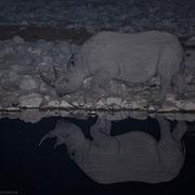 """""""Streifenhörnchen"""" - die kleinen Wasserwellen reflektieren das Licht und zeichnen feine Linien auf das Rhino. Aber Streifen machen bekanntlich schlank!"""