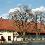 Friedrichshafener Straße - Rosskastanien
