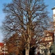 Kirchstraße