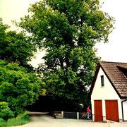 Kanalstraße - Linde