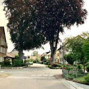 Hirschweg - Buchen