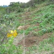 ロープを張って掘り始めました。