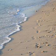 Viele Korallen und Muscheln am Strand von Gili Trawangan