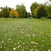紅葉が始まり、落ち葉もきれいです