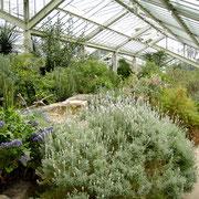 10種類の異なる気候帯を散策しながら植物の生態を観察できます。繊細なランや食虫植物が育てられています
