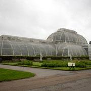 パーム・ハウス 熱帯雨林の植物を集めた温室