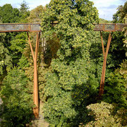 樹冠の植物観察だけでなく、鳥や昆虫を探しても面白いです