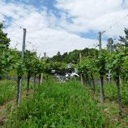 bike&wine - unsere Heimat in Baden